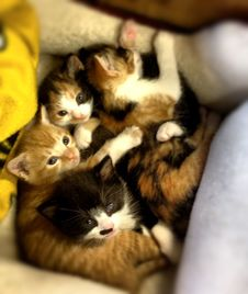 Group of kittens lays on a comfy bed and blanket