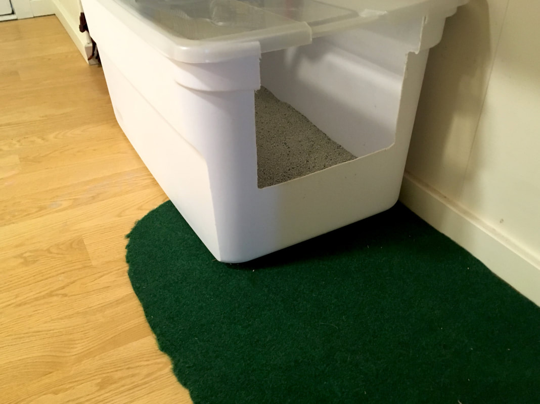 Send us pictures of your homemade litter box and we may feature them here! : litter box on carpet - Aboutintivar.Com