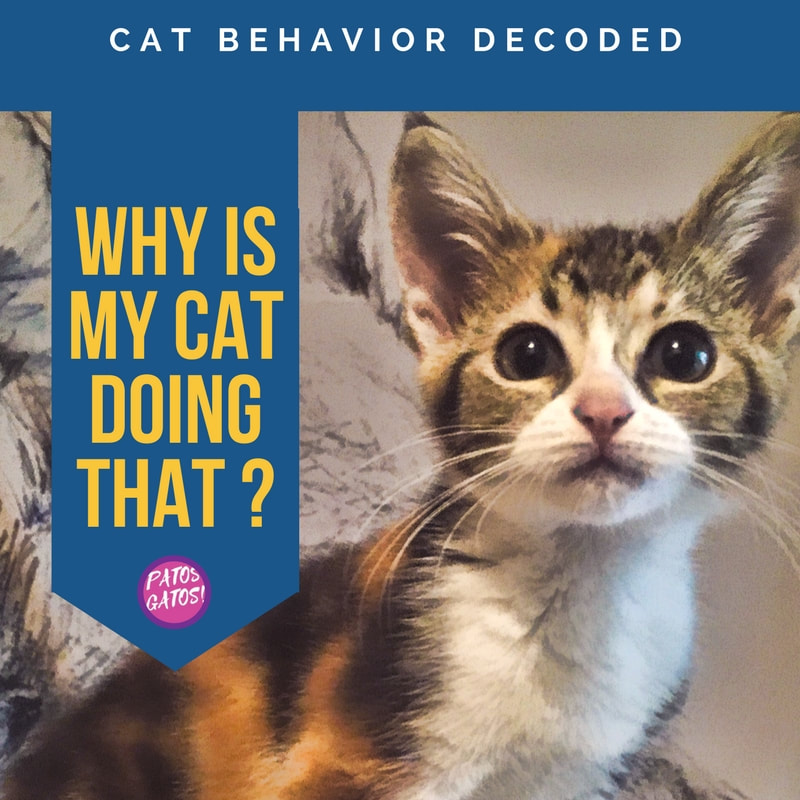Picture Why is my cat doing that? Cat Behavior Decoded